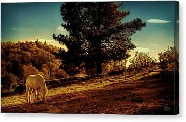 Springtime California Landscape Canvas Print by Douglas MooreZart