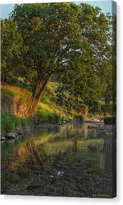 July Morning Along The Creek Canvas Print by Bruce Morrison