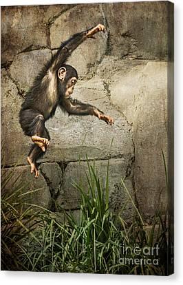 Chimpanzee Canvas Print - Jump For Joy by Jamie Pham