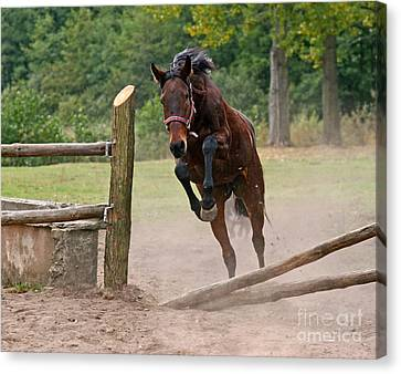 Bay Horse Canvas Print - Jump Jump by Angel  Tarantella