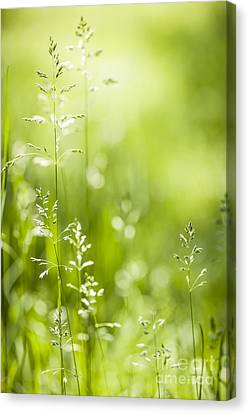 June Green Grass  Canvas Print by Elena Elisseeva