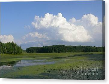June Reservoir Canvas Print by Betsy Cotton