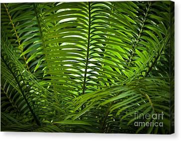 Jungle Fern Canvas Print