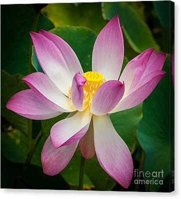 Jungle Garden Flower Canvas Print