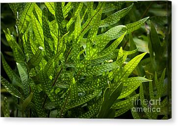 Jungle Spotted Fern Canvas Print