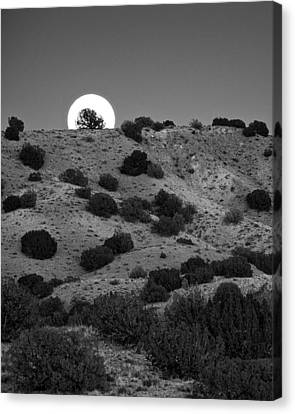 Canvas Print featuring the photograph Juniper At Moonrise by Mary Lee Dereske