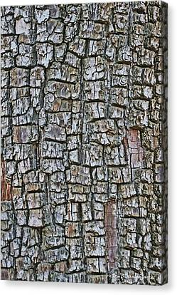 Canvas Print featuring the photograph Juniper Bark- Texture Collection by Tom Janca