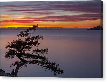 Juniper Point Canvas Print