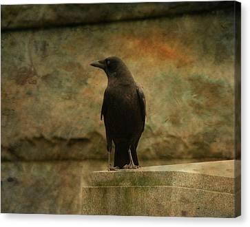 Just A Blackbird  Canvas Print