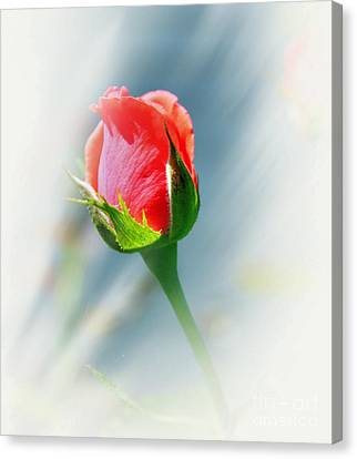 Just A Bud Canvas Print by Judy Palkimas