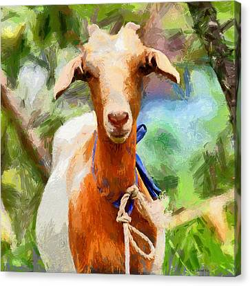 Just A Goat Canvas Print