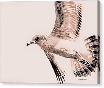 Just A Seagull Canvas Print by Deborah Benoit