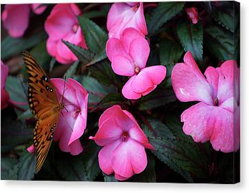 Canvas Print featuring the photograph Just A Small Taste For This Butterfly by Thomas Woolworth