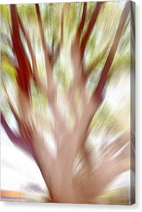 Just A Tree Canvas Print by Beto Machado