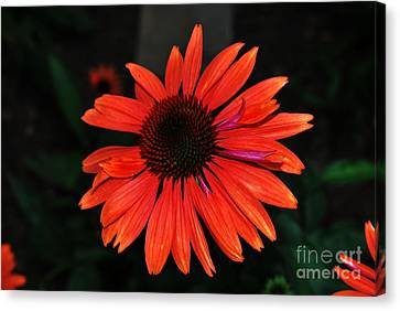 Canvas Print featuring the photograph Just As Pretty by Judy Wolinsky