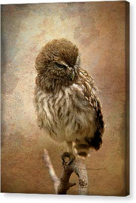 Just Awake Little Owl Canvas Print by Perry Van Munster