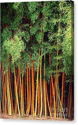Just Bamboo Canvas Print by Sue Melvin