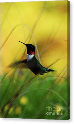Just Flying Canvas Print