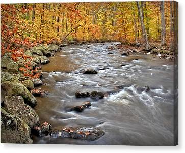 Just Going With The Flow Canvas Print by Susan Candelario