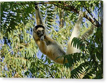Just Hanging Around Canvas Print by Michele Burgess