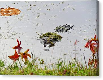 Canvas Print featuring the photograph Just Hanging Out by Cynthia Guinn