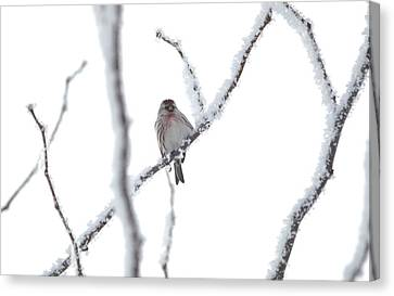 Canvas Print featuring the photograph Just Hanging Out by Dacia Doroff