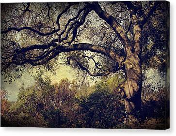 Just How It Ought To Be Canvas Print by Laurie Search