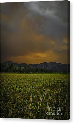 Just One Of Those Days Canvas Print by Mitch Shindelbower