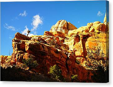 Just One Tree Canvas Print by Jeff Swan