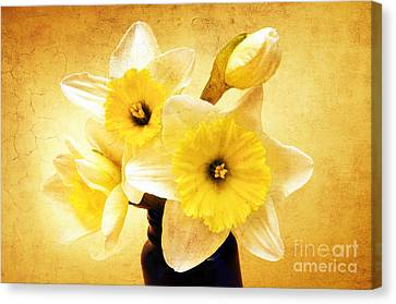 Just Plain Daffy 1 - Flora - Spring - Daffodil - Narcissus - Jonquil Canvas Print by Andee Design