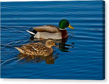 Just Swimming Along Canvas Print by Doug Long