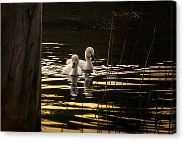 Just The Two Of Us Canvas Print by Peter Scott