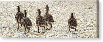 Just Waddling Canvas Print by Tammy  Taylor