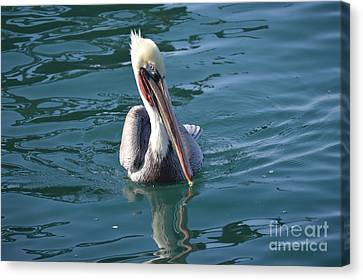 Canvas Print featuring the photograph Just Wading by Laurie L