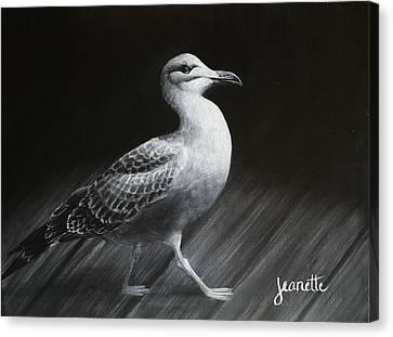Juvenile Gull Canvas Print