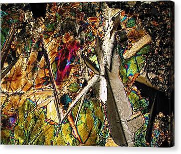 Jungle Dusk Canvas Print