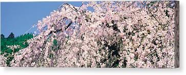 Jyoshokou-ji Kyoto Japan Canvas Print by Panoramic Images