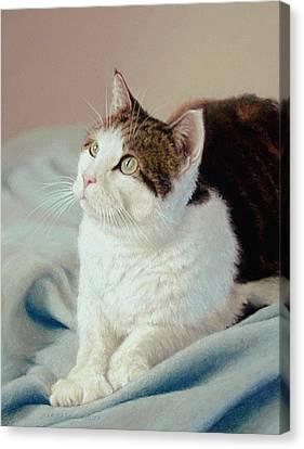 K C  Kitty Cat Canvas Print by Barbara Groff