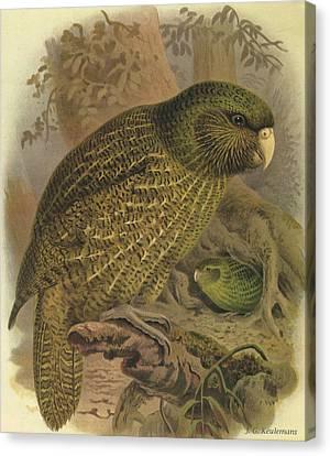 Kakapo Canvas Print by Dreyer Wildlife Print Collections