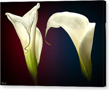Cala Lily 3 Canvas Print by Mark Ashkenazi