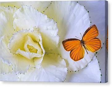 Kale And Orange Butterfly Canvas Print by Garry Gay