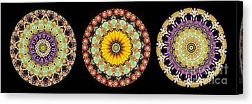 Kaleidoscope Ernst Haeckl Inspired Sea Life Series Triptych Canvas Print by Amy Cicconi