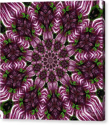 Kaleidoscope Raddichio Lettuce Canvas Print by Amy Cicconi