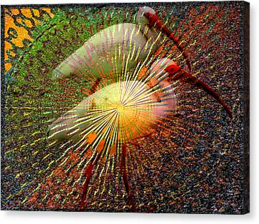Kalidescope Of Ibis Canvas Print by Irma BACKELANT GALLERIES
