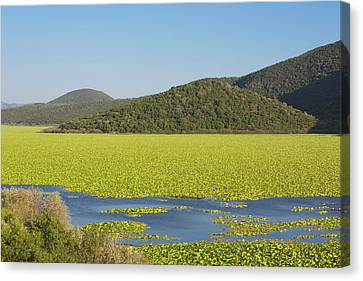 Kalodikiou, Or Kalodiki Lake, Greece Canvas Print