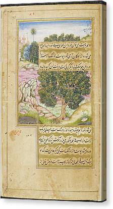 Kami Tree (mimusops Kauki) Canvas Print by British Library