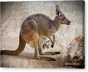 Kangaroo Canvas Print - Kangaroo And Joey by Jamie Pham