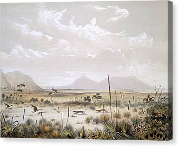 Kangaroo Hunting Near Port Lincoln Canvas Print by George French Angas