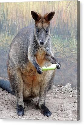 kangaroo Snack Canvas Print by Munir Alawi