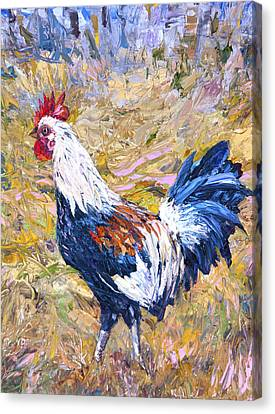 Kapaa Rooster Canvas Print by Steven Boone